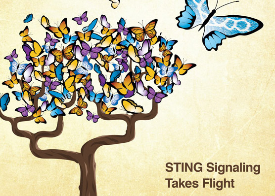 STING like a Butterfly: Molecular Cell Cover Art